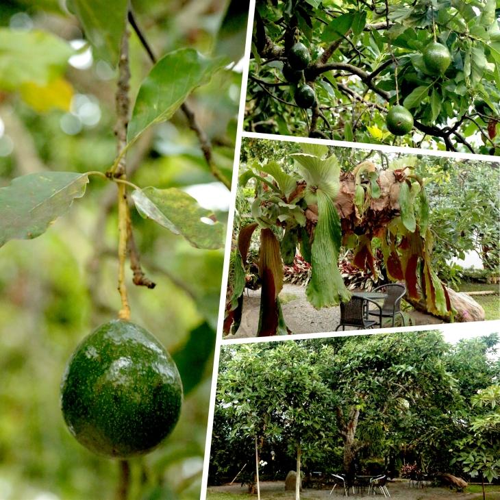 avocado-collage