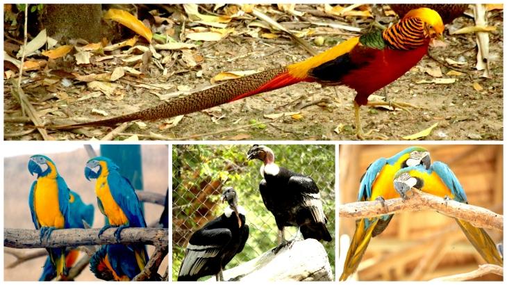 cartagena-bird-sanctuary1
