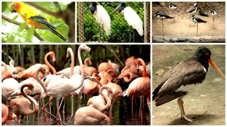 cartagena-bird-sanctuary2