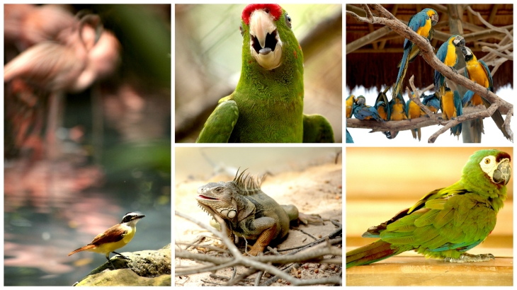 cartagena-bird-sanctuary4