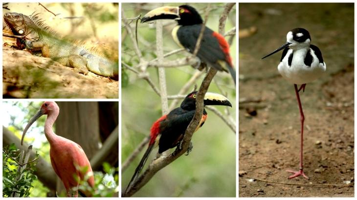 cartagena-bird-sanctuary5