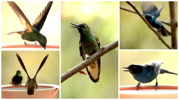 colombia-hummingbird-sanctuary