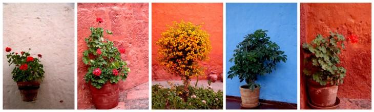 arequipa-santa-catalina-monastery-flowers