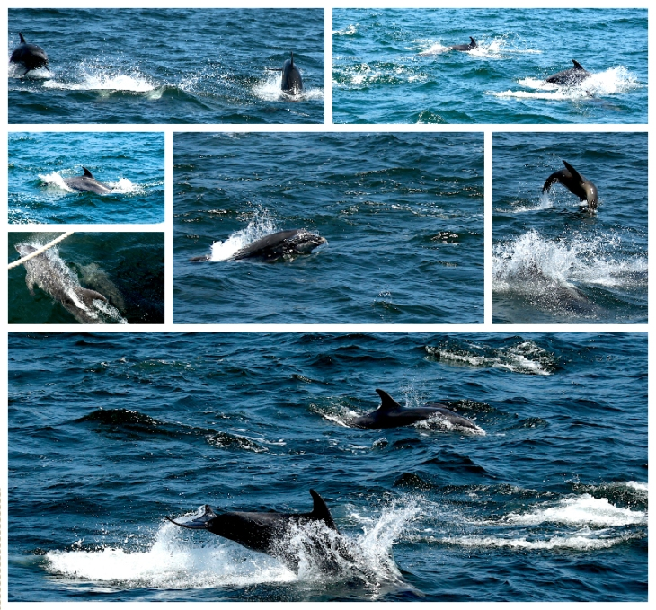 galapagos-dolphins