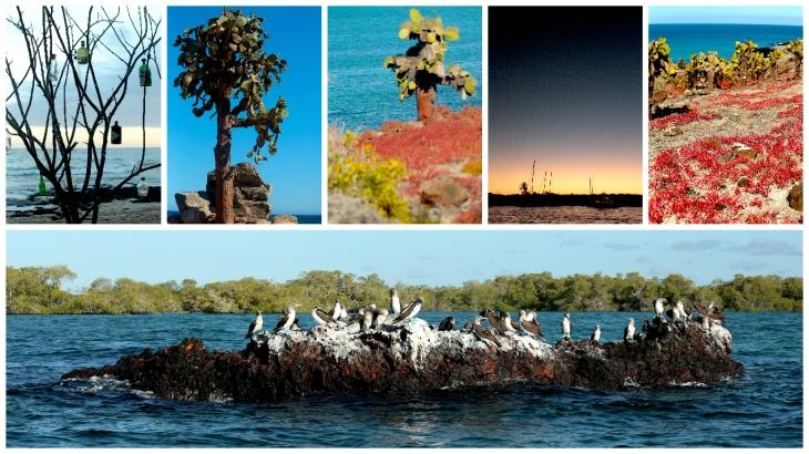 galapagos-landscape6