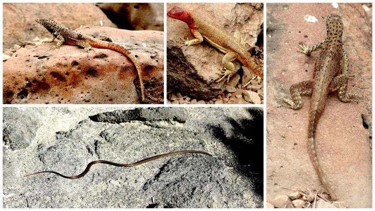 galapagos-lizards-and-snake