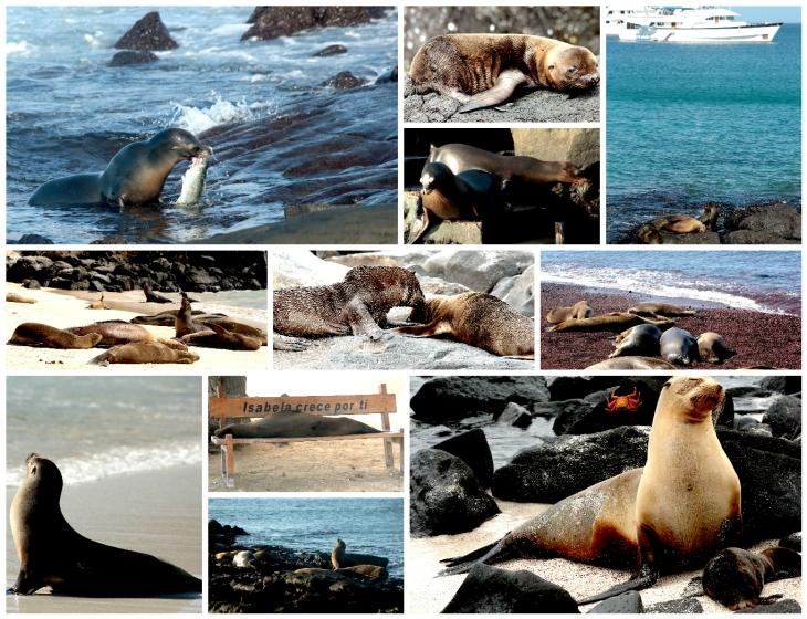 galapagos-sea-lions-1