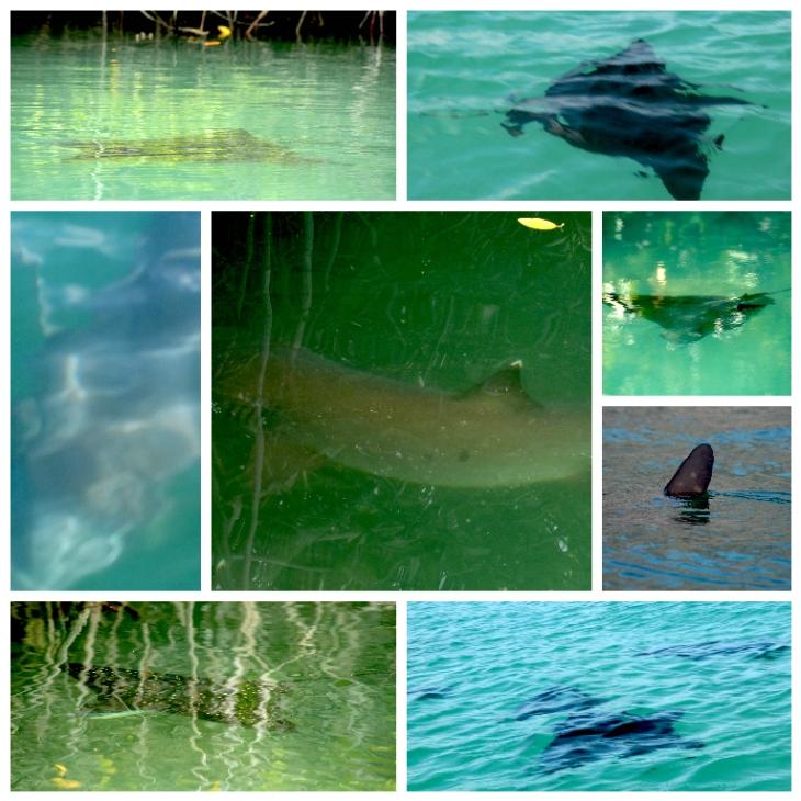 galapagos-sharks-rays-sun-fish
