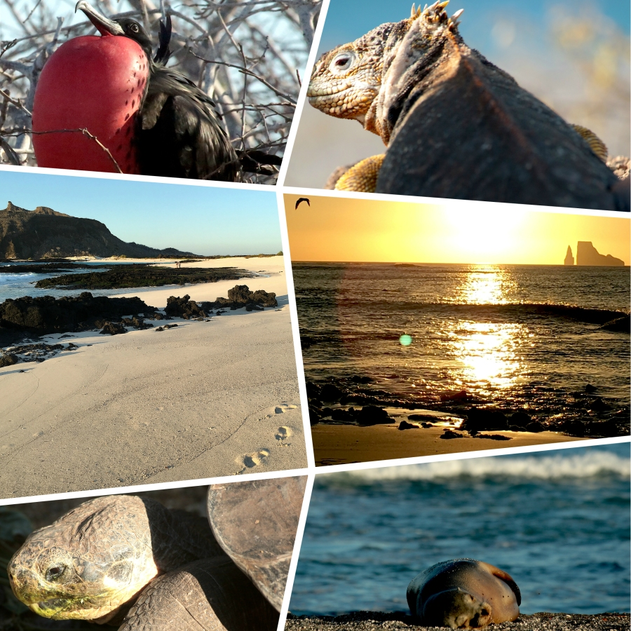 Taking nothing but photos, leaving nothing but footprints – Galapagos – The Enchanted Islands