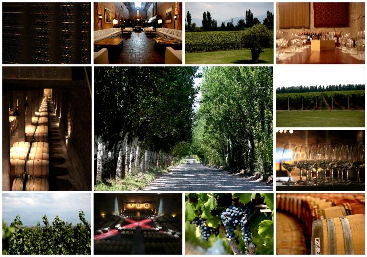 mendoza-wines-2